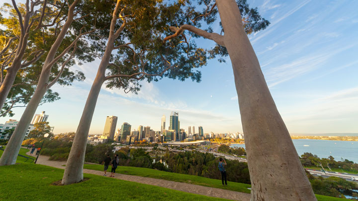 Panoramic view of Perth city from Kings Park